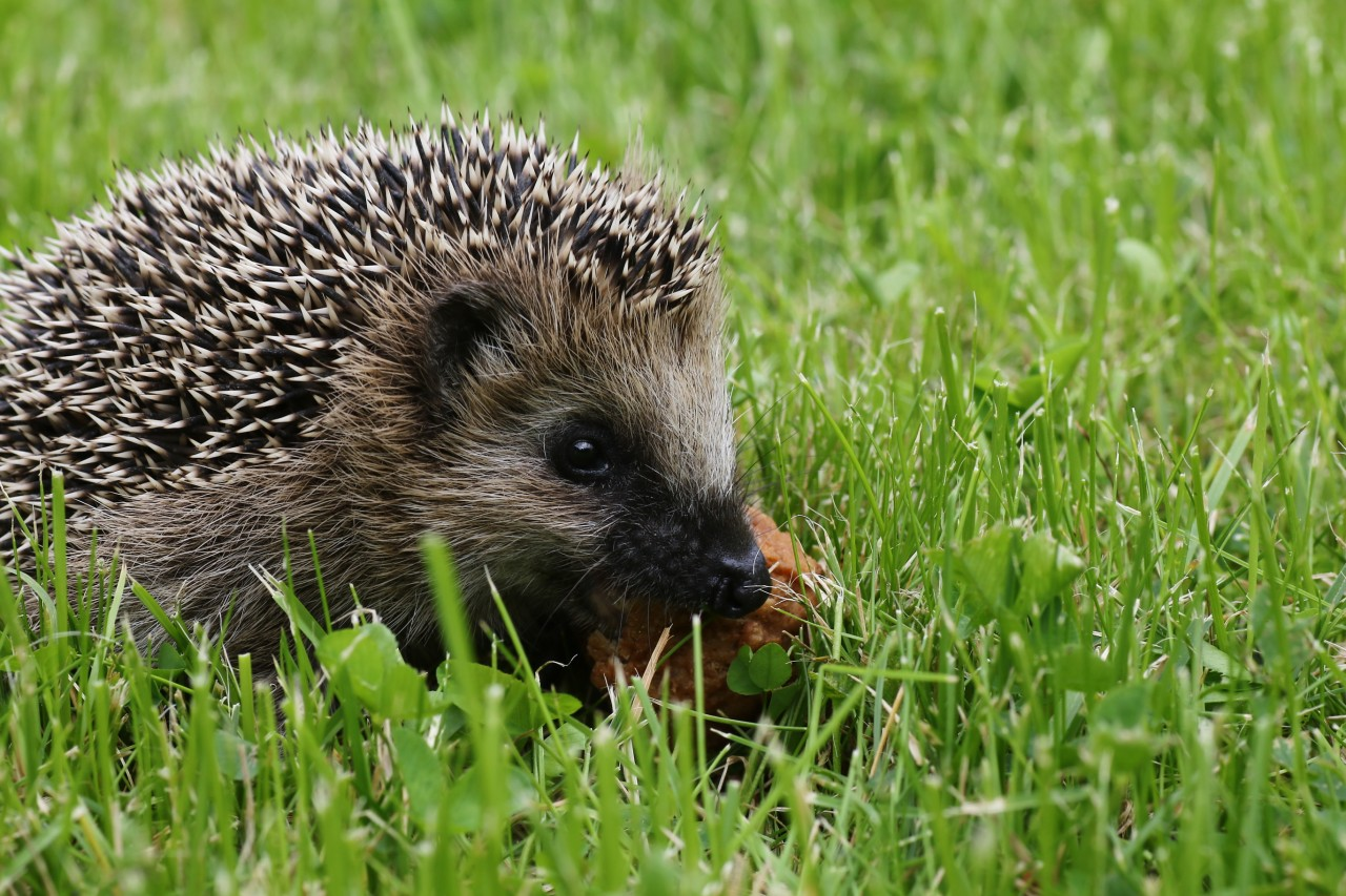Foxes vs hedgehogs: 7 evidence-based leadership tips for headteachers