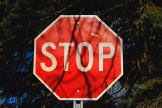 Stop sign among trees