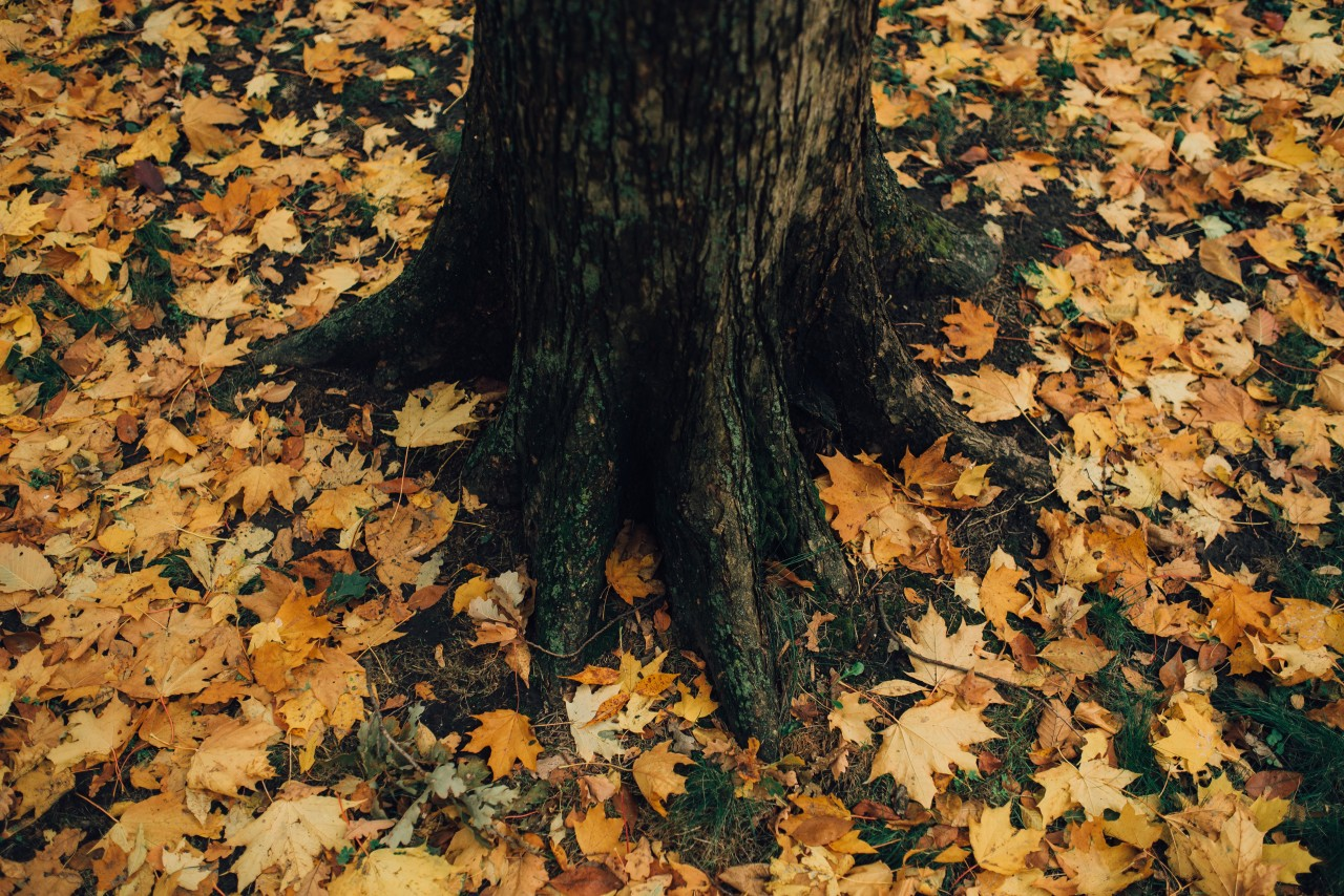 Fallen leaves around tree